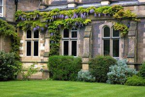 Wisteria in the garden of HMC