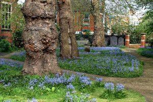 Chapel garden spring 2008