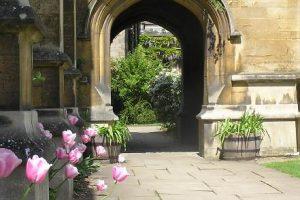 HMC tulips